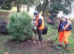 Festa dell'albero, si pianta a villa Baragiola