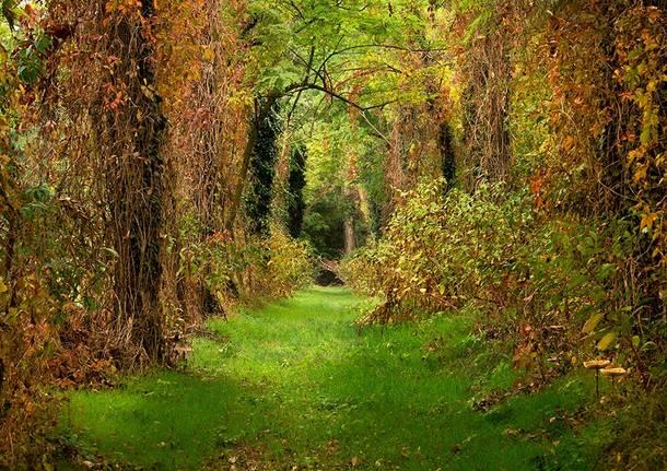 foliage vanzago