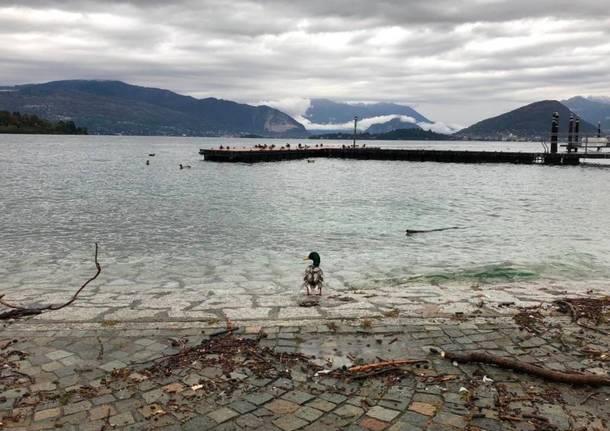 Il Lago Maggiore sempre più alto (foto del 2 novembre)