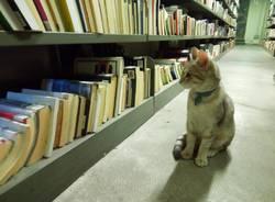 matisse gatto biblioteca busto arsizio