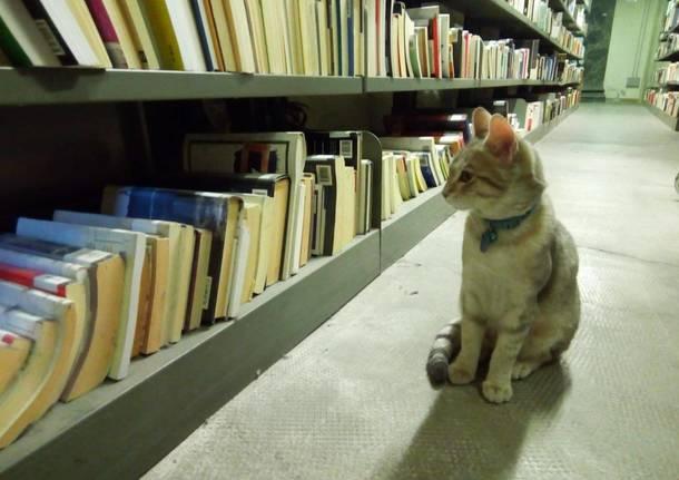 sito di incontri gatto signora