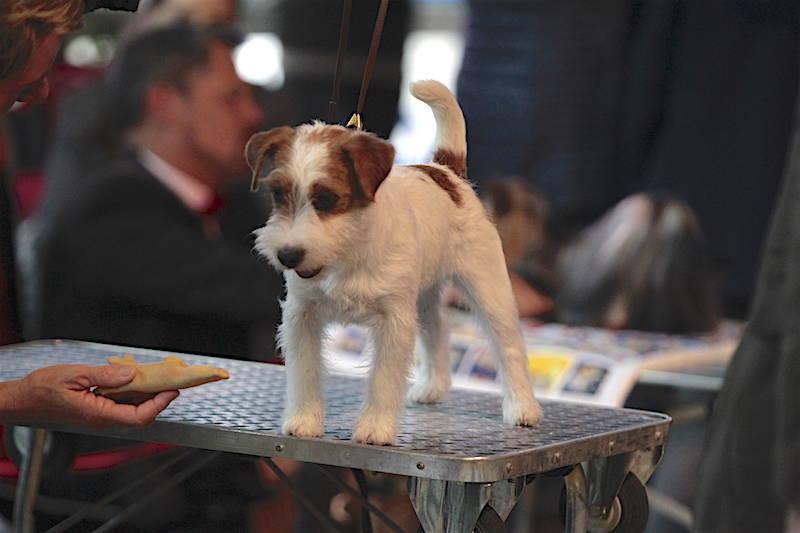 Mostra canina a Malpensa Fiere
