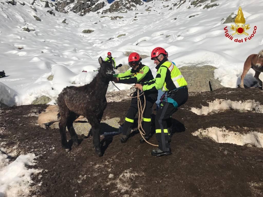 Salvataggio Cavalli Val Masino