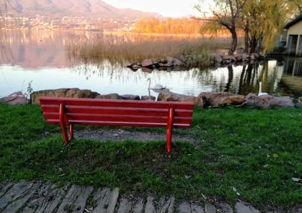 Una panchina rossa a Cazzago Brabbia