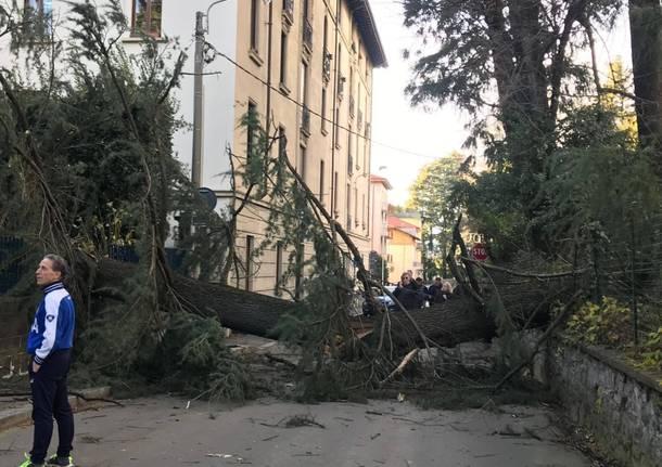 albero caduto casbeno