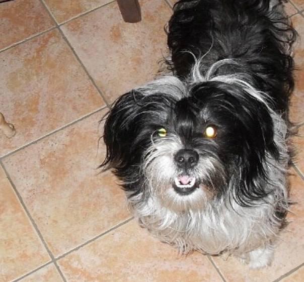 Aiutatemi a trovare il mio cane