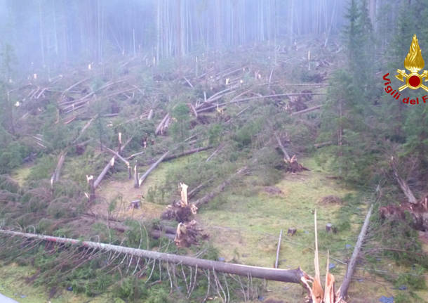 dolomiti alberi abbattuti