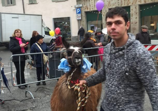 Animali benedetti da sant'Antonio