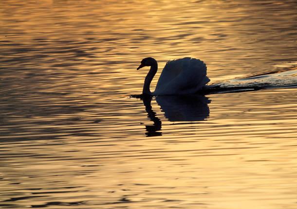 Lago dorato