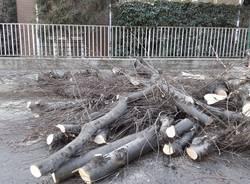 """Abbattimenti in via Roma, \""""Vogliamo sostituire le piante con essenze meno impattanti\"""""""