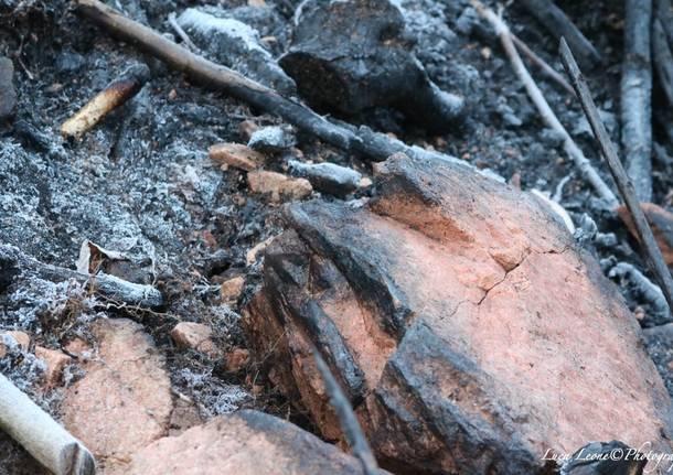 Reportage in Valganna nei boschi feriti dall'incendio