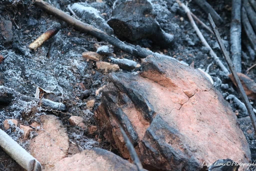Reportage in Valganna nel bosco ferito dall'incendio (foto di Luca Leone)