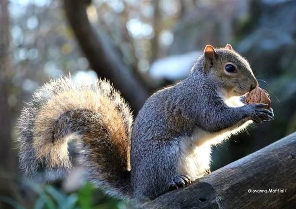 Gli scoiattoli del Parco Castello