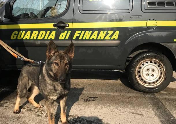 cane antidroga guardia di finanza