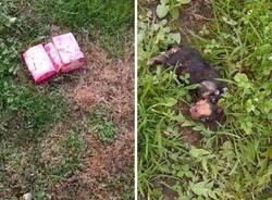 cane morto abbandonato nel bosco busto arsizio