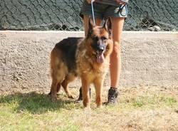 Cani da adottare Somma Lombardo