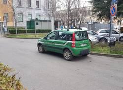 Carabinieri forestali in Municipio per il taglio dei bagolari