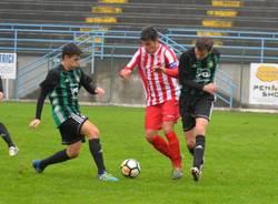 castellanzese busto 81 calcio dilettanti