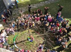 Kaki tree project 2019