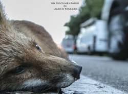 roadkill la strage ignorata