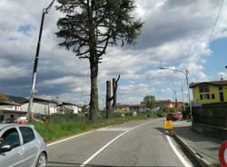 Abbattuti i grandi alberi sulla statale