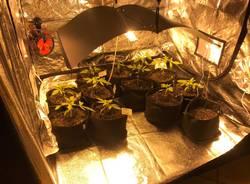 La mini serra di marijuana