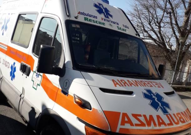 ambulanza veterinaria