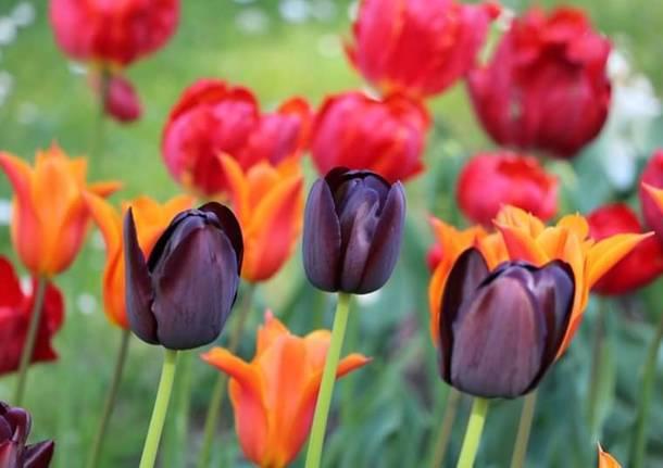 I colori della primavera nelle foto di Giovanna