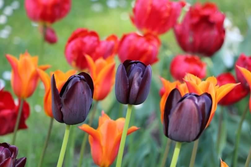 I colori delle primavera nelle foto di Giovanna Maffioli