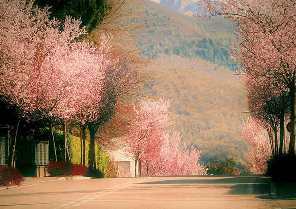 Induno olona, primavera - foto di Angelo Baroni