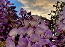 La magia della primavera a Sant'Eusebio
