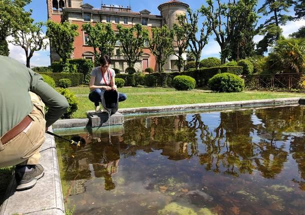 A villa Toeplitz si mettono in salvo i girini