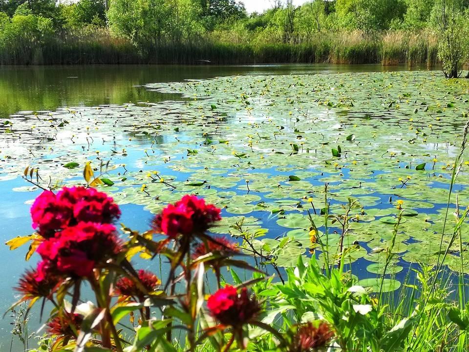Acqua e fiori - foto di Anna Colombo