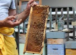 apicoltore fai