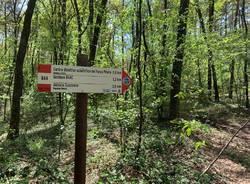 Parco pineta a Tradate