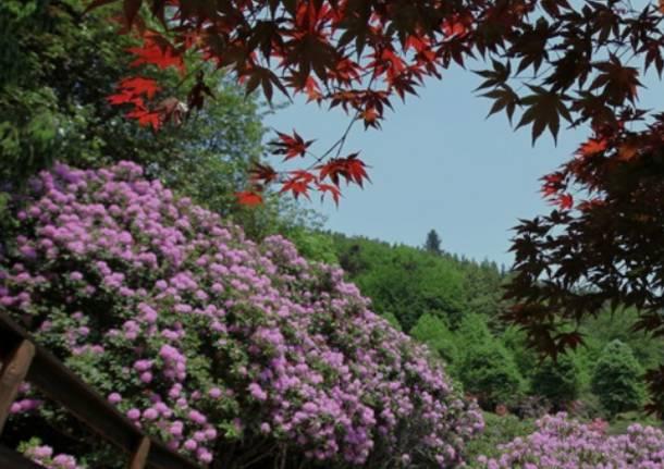 rododendri oasi zegna