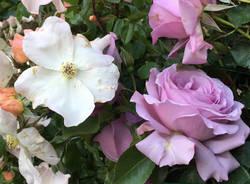 Yougardener Flower Show - maggio 2019