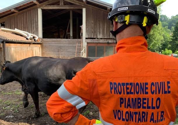 La grande esercitazione civile per salvare gli animali