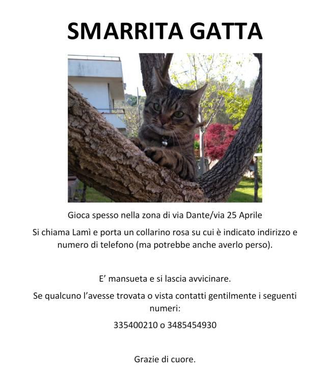 Smarrita Gattina Soriana Grigia