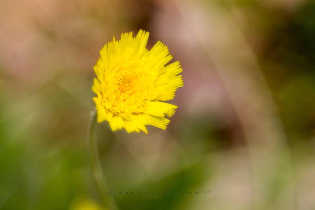 Solo giallo