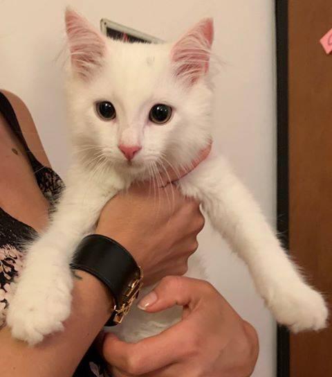 Chi riconosce questo gattino?