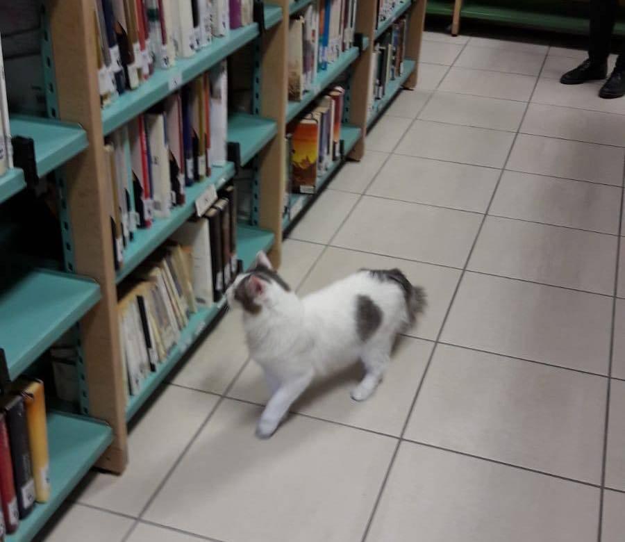 Gattino biblioteca Cavaria