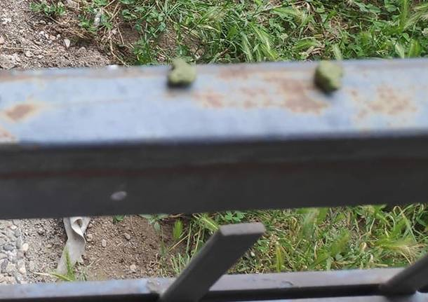 crocchette cancello