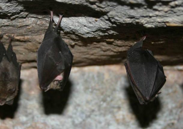 miniera pipistrelli