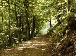 Una montagna di boschi