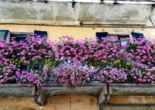 angela boschiroli azzate balcone fiorito