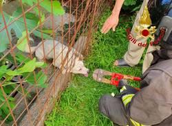 Cagnolino salvato dai vigili del fuoco