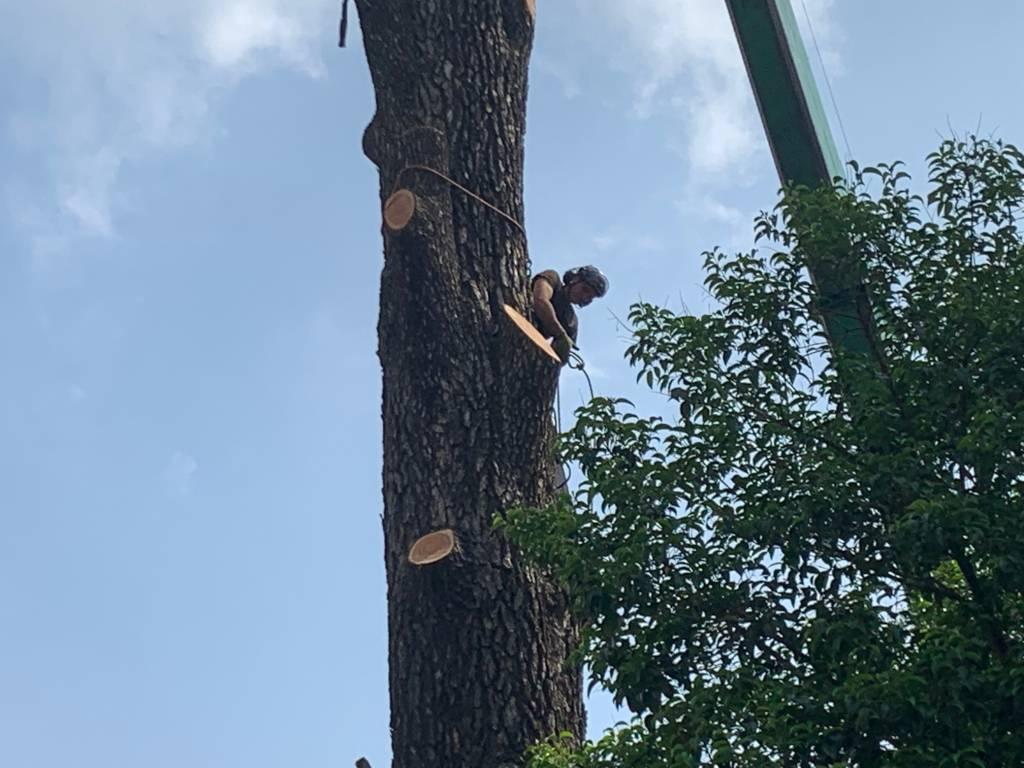 Francesco Minelli treeclimber