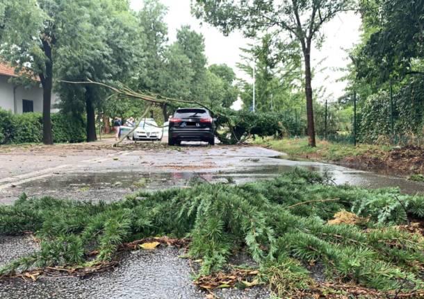Alberi caduti, due auto colpite a Busto Arsizio