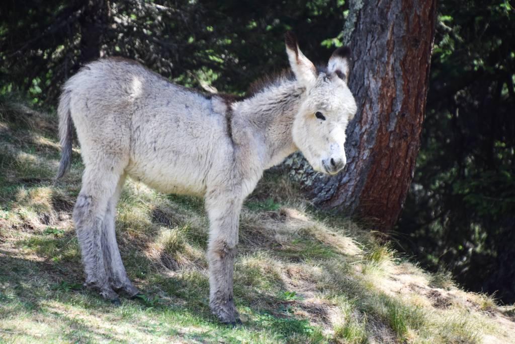 Fauna di Montagna
